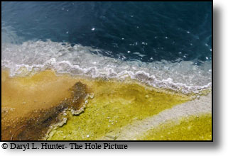 The orange in the photo is the colonies of extremophiles, the greenish yellowlikely is cyanobacteria