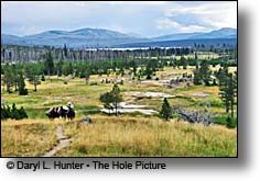 Packstring horseback rider Heart Lake Yellowstone