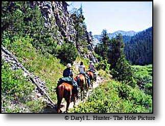 Caribou Targhee national forest east of Idaho Falls has countless riding trails