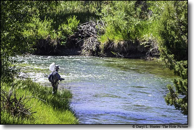 Fly-fishing the Montana's Ruby River